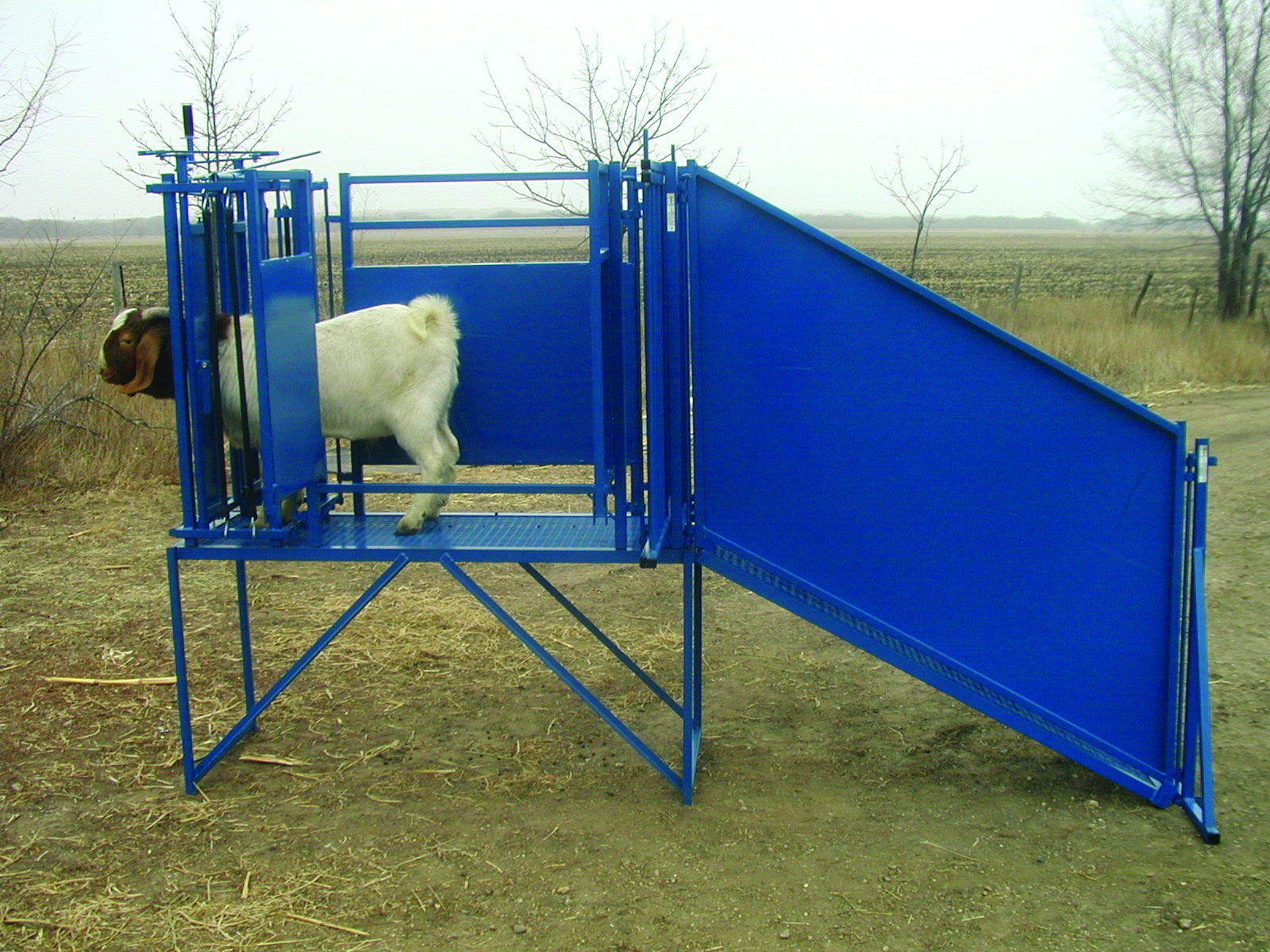 Sydell Goat And Sheep Loading Ramps Goat Loading Ramps