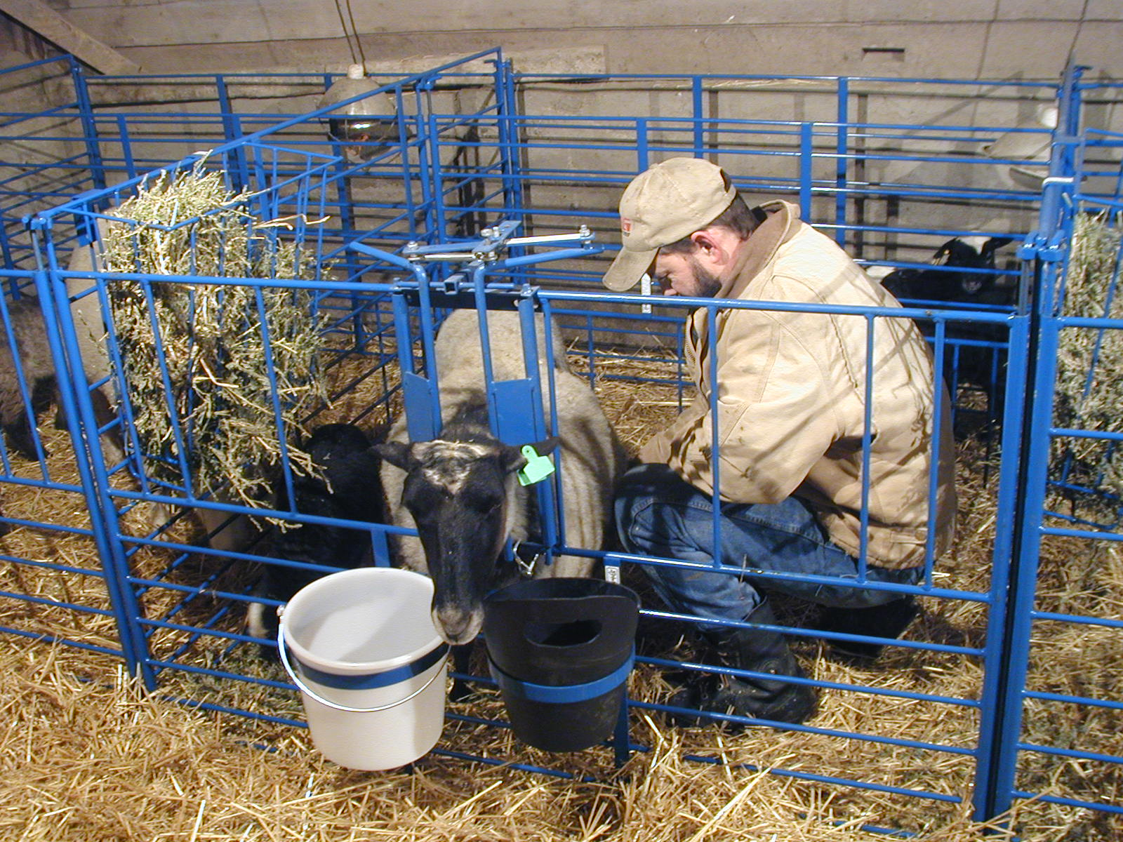 Calf Pen Systems further 5426020 in addition Watch also Backyard Farm Designs additionally Build A Portable Goat Shed. on barn designs for sheep