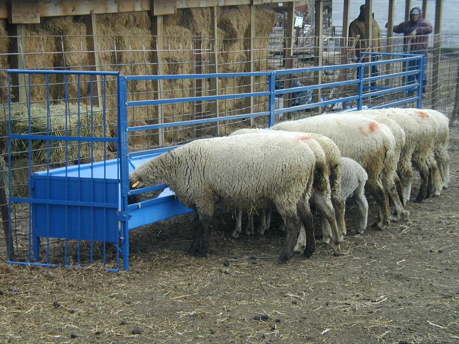 feeder hay rack easy with thoughts ohio img goat