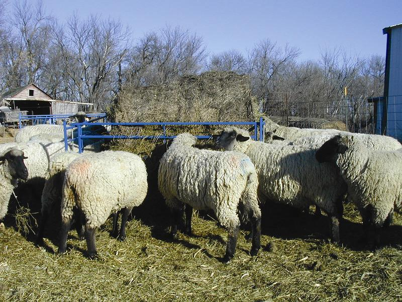 how to ensure continue quality of hay